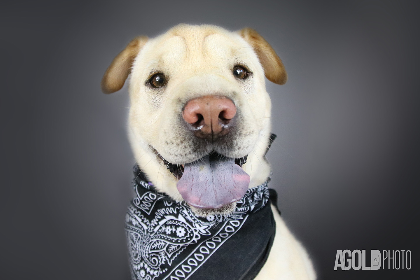 Don, a stray dog from Israel, will steal your heart