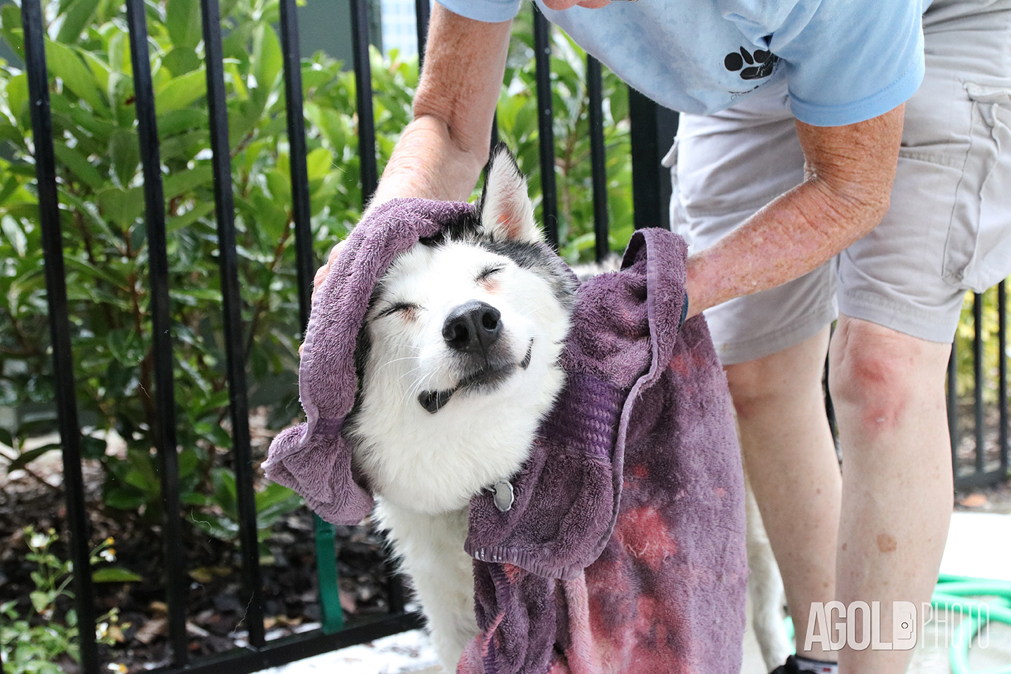 Vets4Pets, Bathing Your Dog for Charity