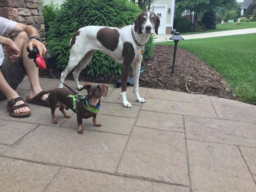 Aloft Asheville Dog Adoption