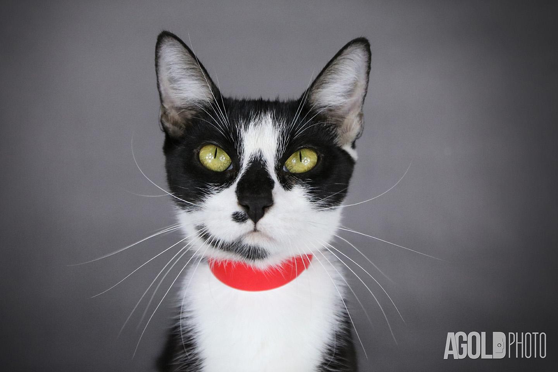 Lily Humane Society Tampa Baytampa Pet Photography 5