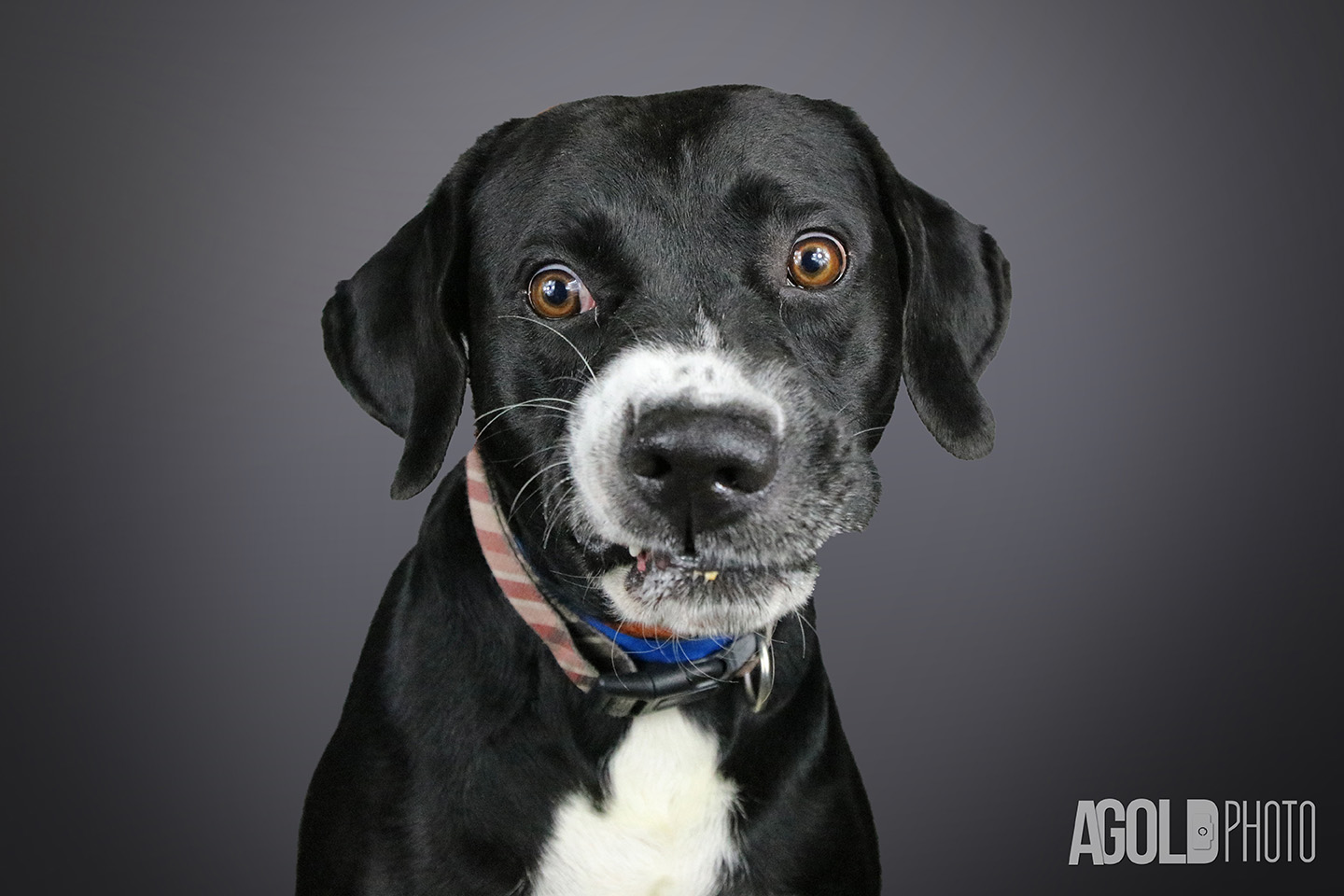 Adoptable Pets Week of July 30, 2016