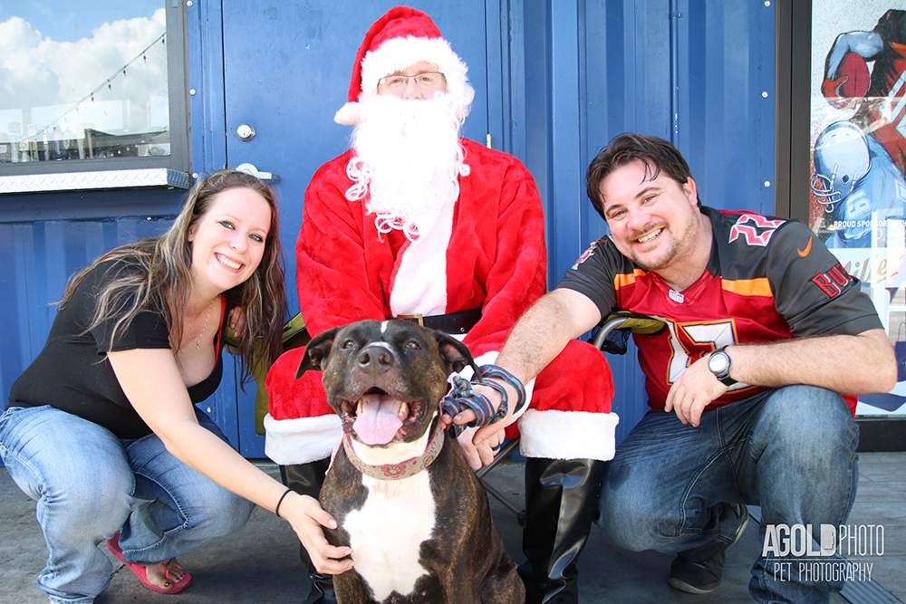 5 Dog Photos with Santa Like You Have Never Seen Before