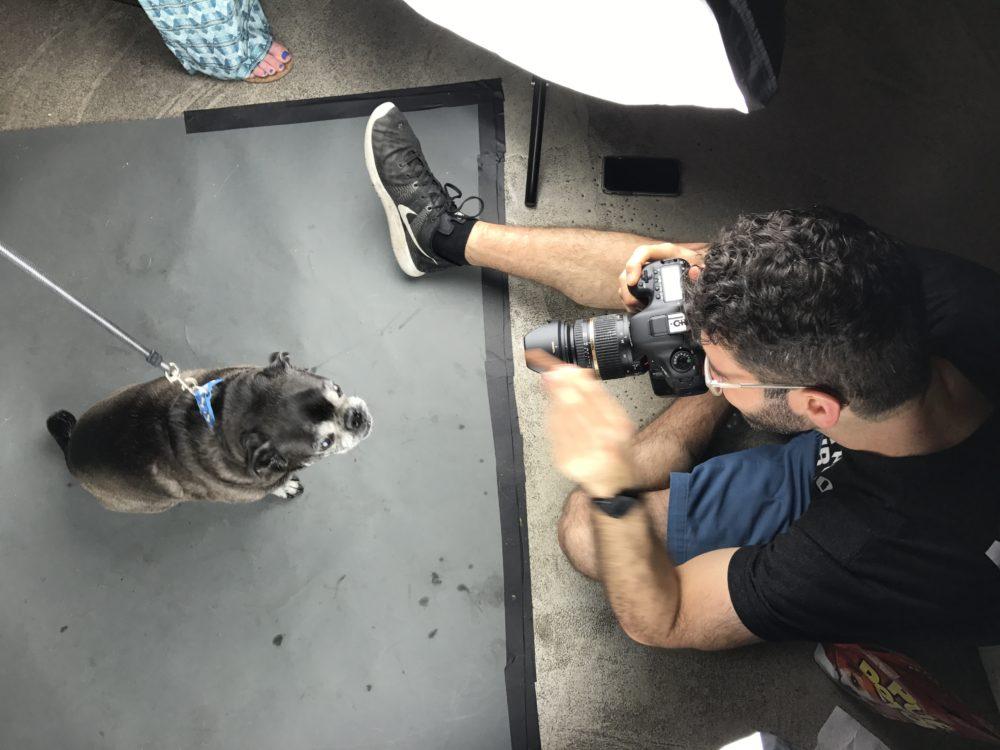 Pet Photo Shoot Fundraiser East Coast Road Trip