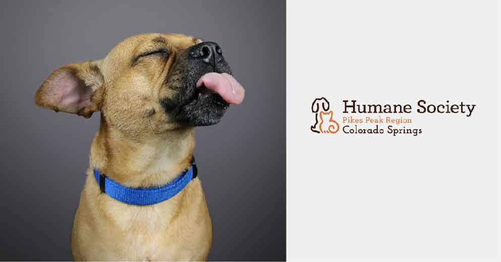 Pet Photo Shoot Fundraiser for Humane Society of Pikes Peak Region