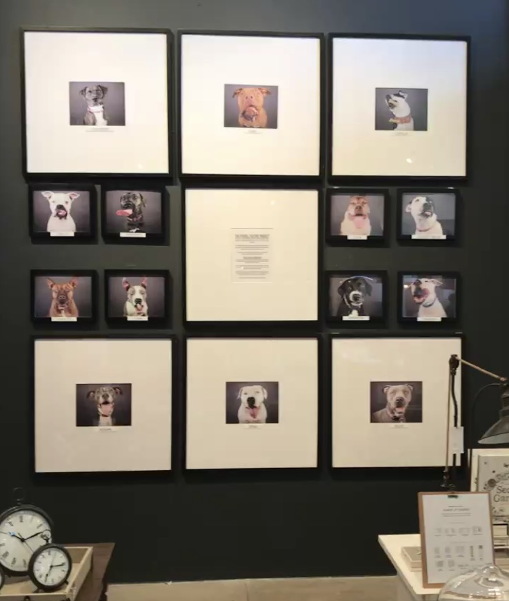Pit Bull Picture Project on Display at Tampa Pottery Barn