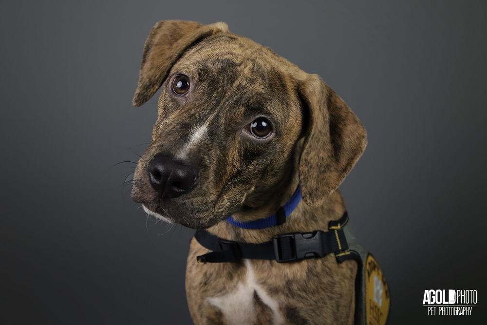 Jericho, a 5 month old Pit Bull Mix Who Needs a Home