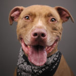 Neglected Pit Bulls Given a Second Chance