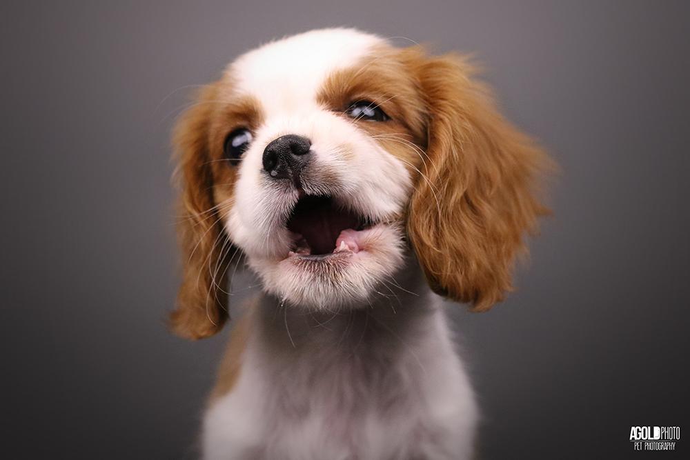 Puppy Progress Photo Package