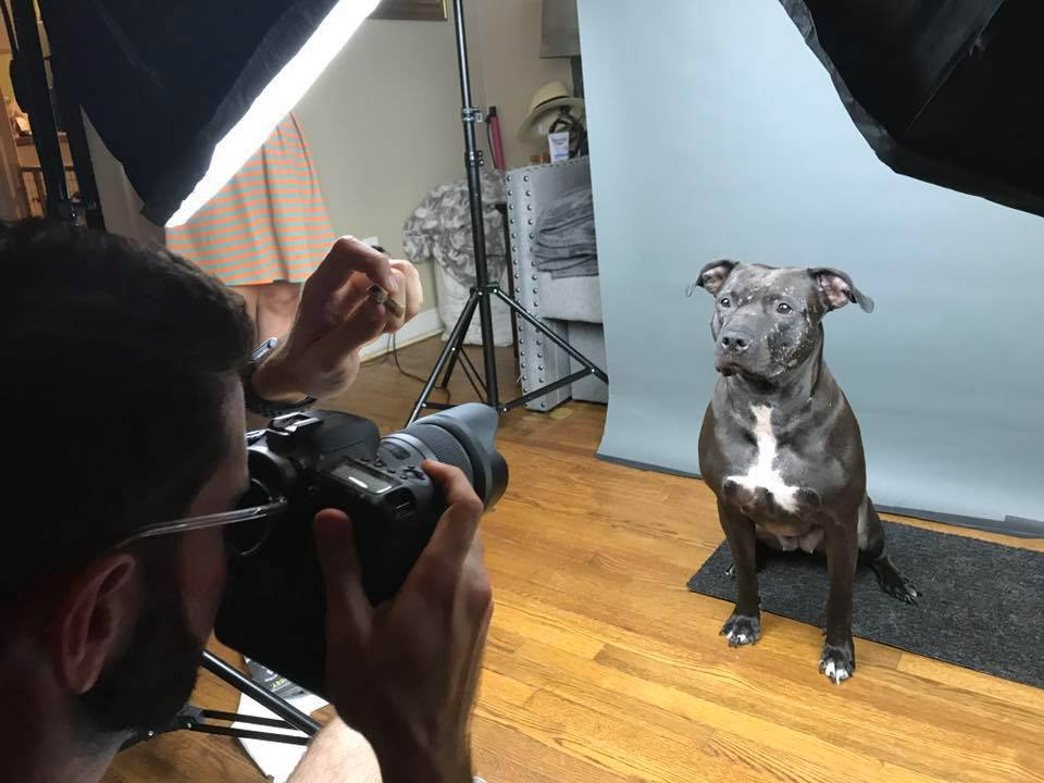 Coming Soon: Online Pet Photography Course