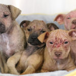 Humane Society Offers Reward for Dumped Puppies