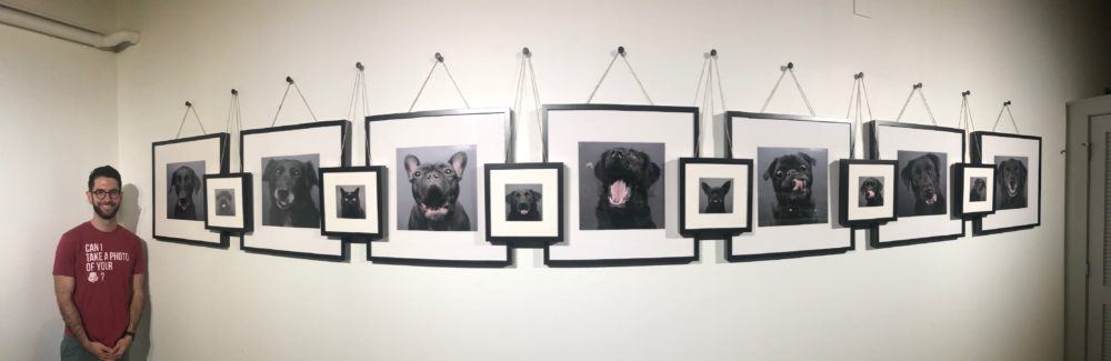 Photo Gallery Sheds Light on Black Pet Syndrome and Adoption