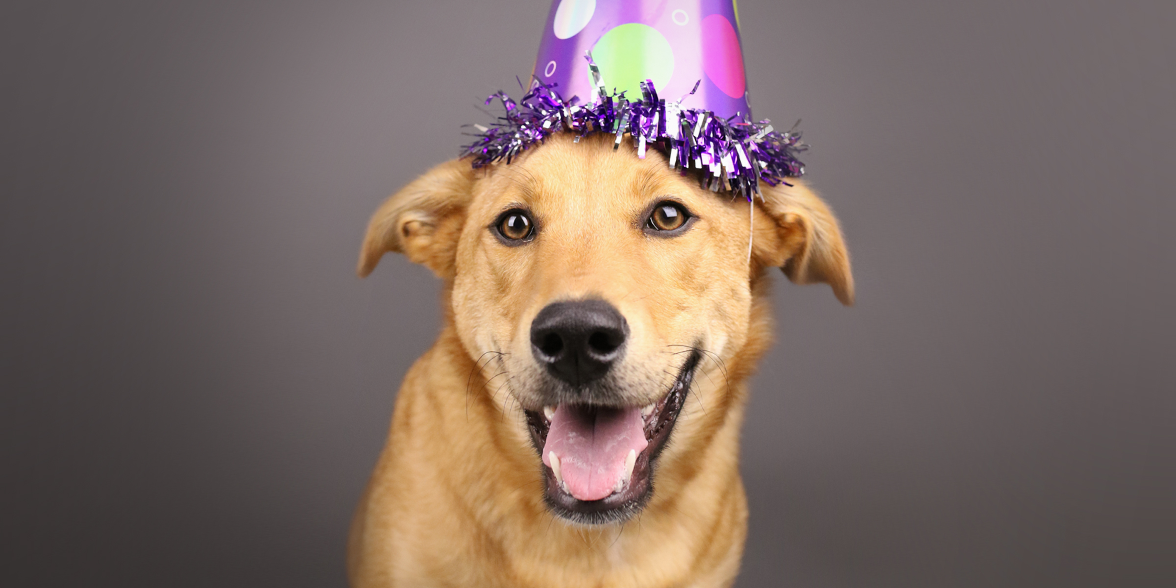 Doggy Birthday Photo Shoot Party
