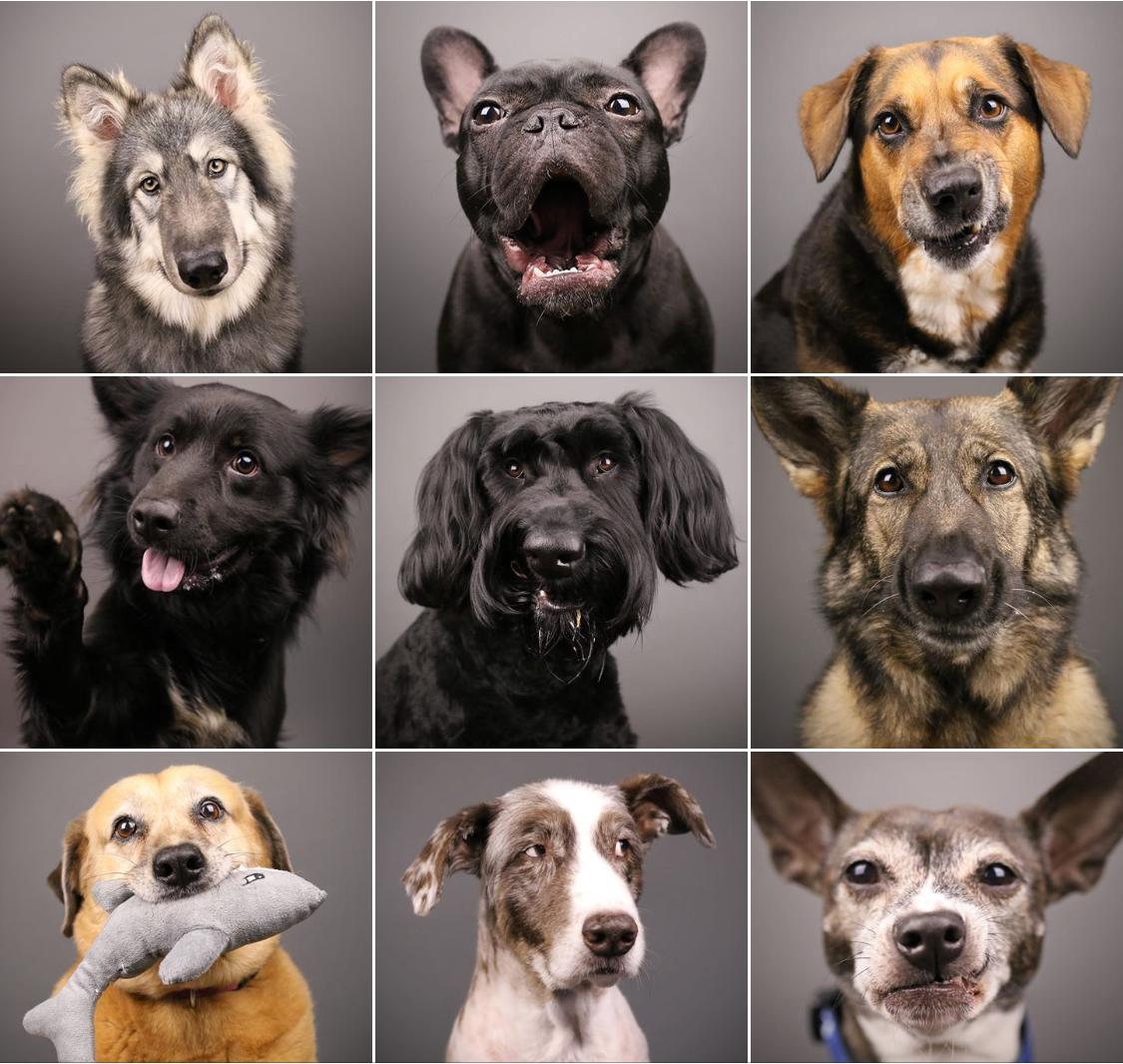 Orlando Pet Photogrpahy