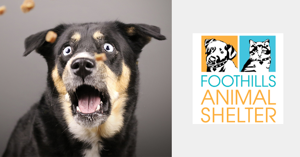 Pet Photo Shoot Fundraiser for Foothills Animal Shelter