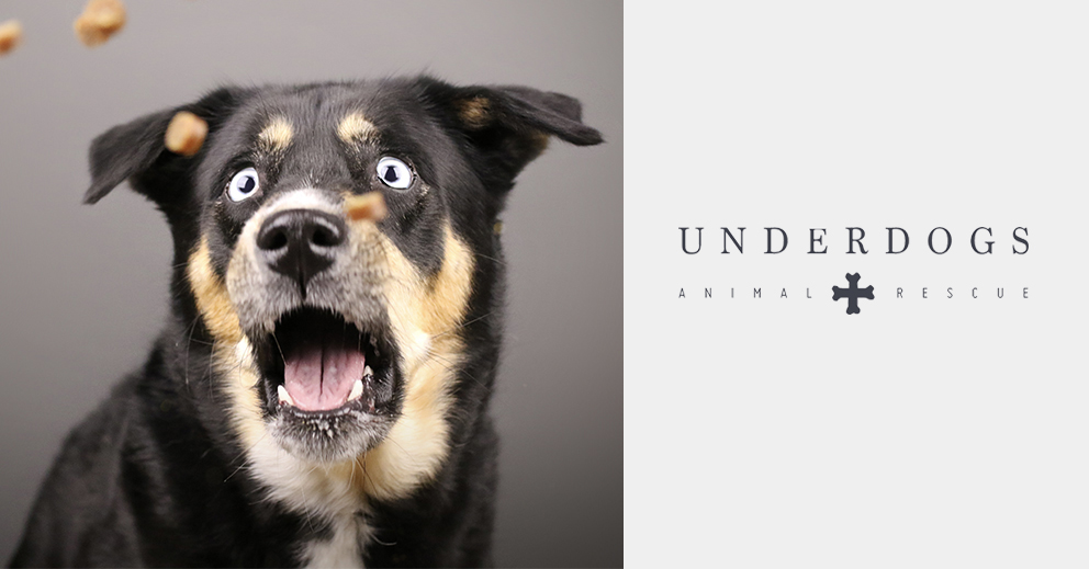 Pet Photo Shoot Fundraiser for Underdogs Animal Rescue