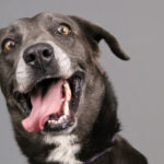 6 Before and After Photos of Adoptable Dogs from Humane Society Tampa Bay