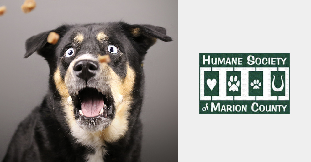 Pet Photo Shoot Fundraiser for Humane Society of Marion County