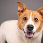 Adoptable Dog Photos from Humane Society Tampa Bay