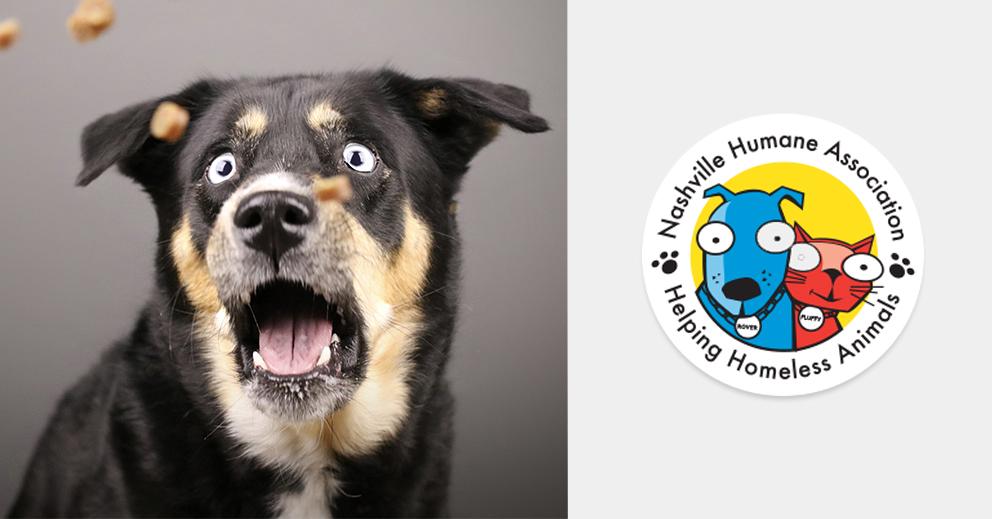 Pet Photo Shoot Fundraiser for Nashville Humane Association