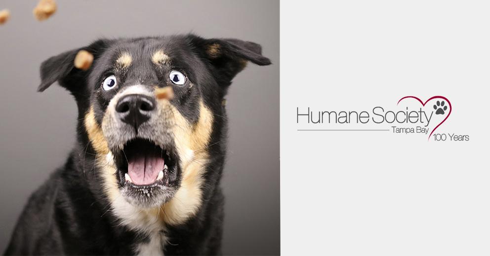 Photo Shoot Fundraiser for Humane Society Tampa Bay