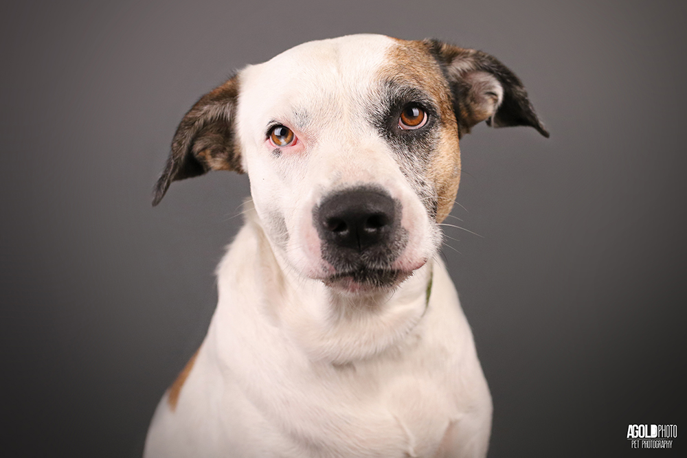 Tampa Pet Photographer Raises Nearly 100 000 For Charity In Just 2 5 Years Agoldphoto Pet Photography