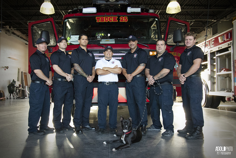 Clover, the burned puppy is now serving as a Fire Station Dog
