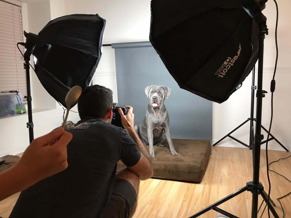 We Don't Have Our Own Pet Photography Studio