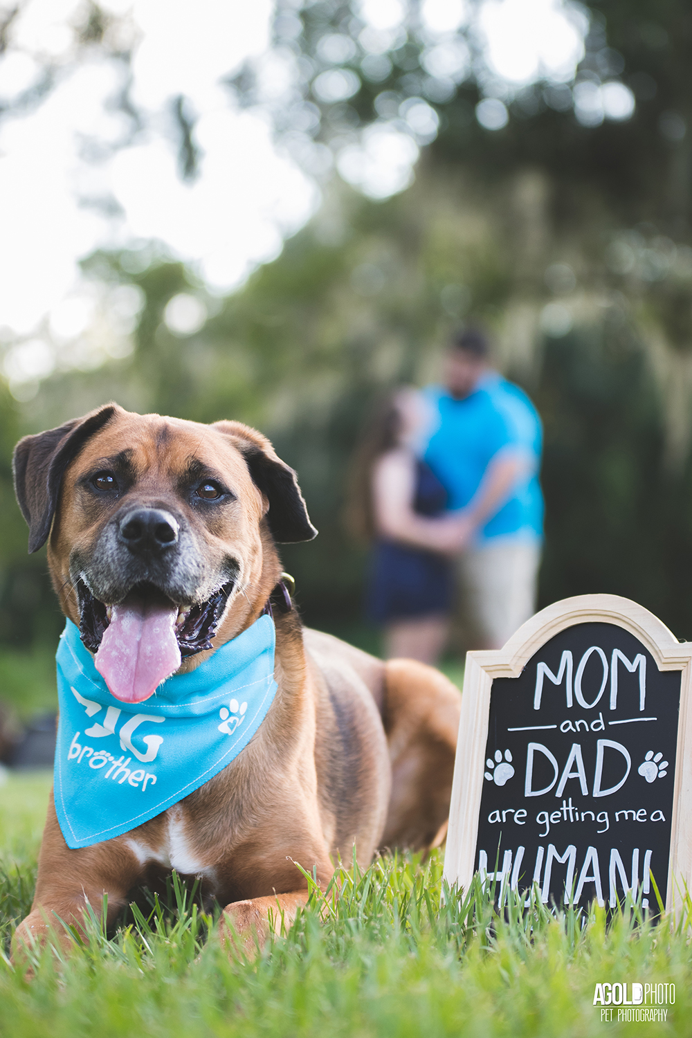 How to incorporate your dog in your baby announcement