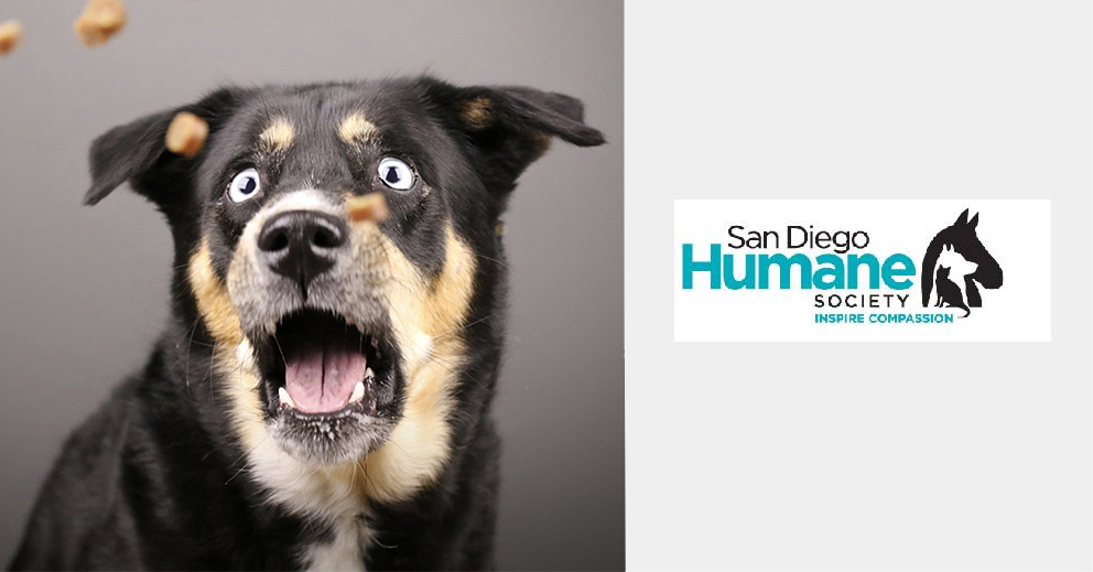 Pet Photo Shoot Fundraiser for San Diego Humane Society