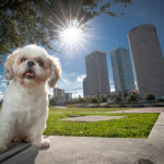 Humane Society Tampa Bay's 2019 Photo Calendar
