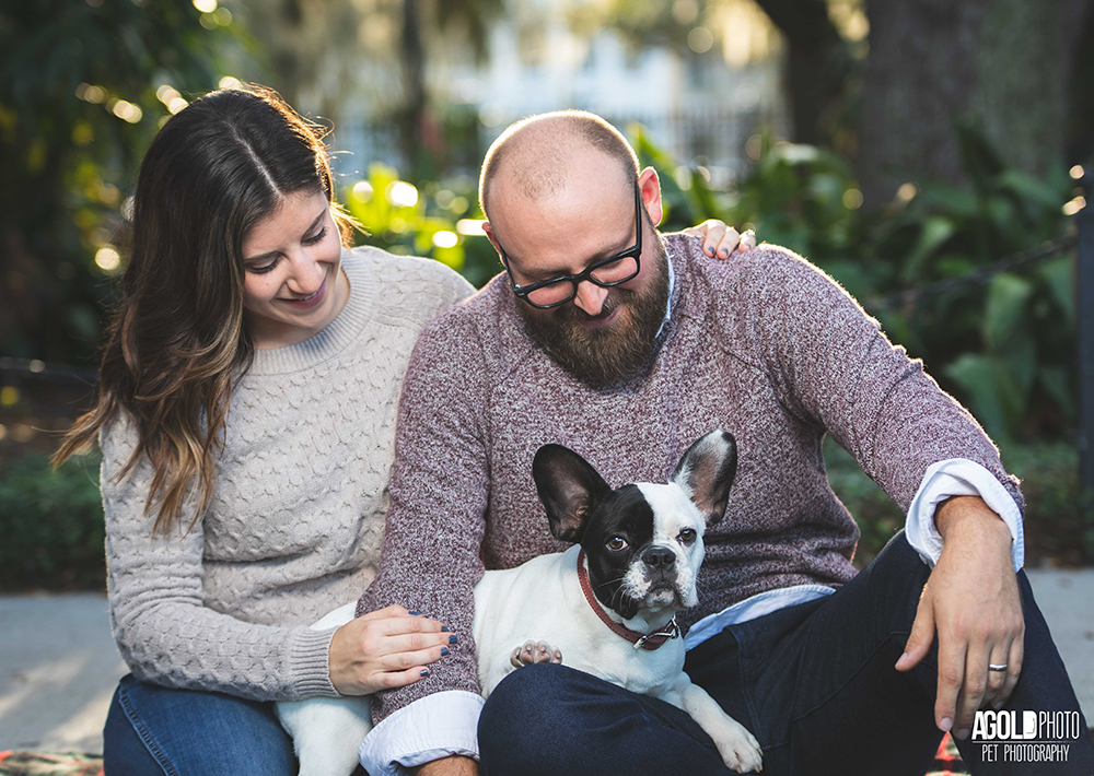 Pia the Frenchie's Pets and People Paw-liday Photo Shoot