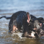 Oli's Splish Splash Pet Photo Shoot