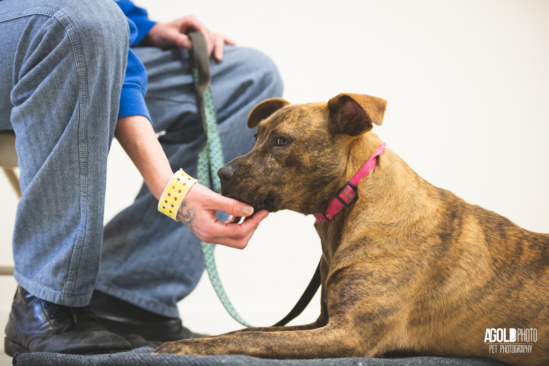 Prison Program Helps Inmates and Hard-to-Adopt Shelter Dogs with Life Skills