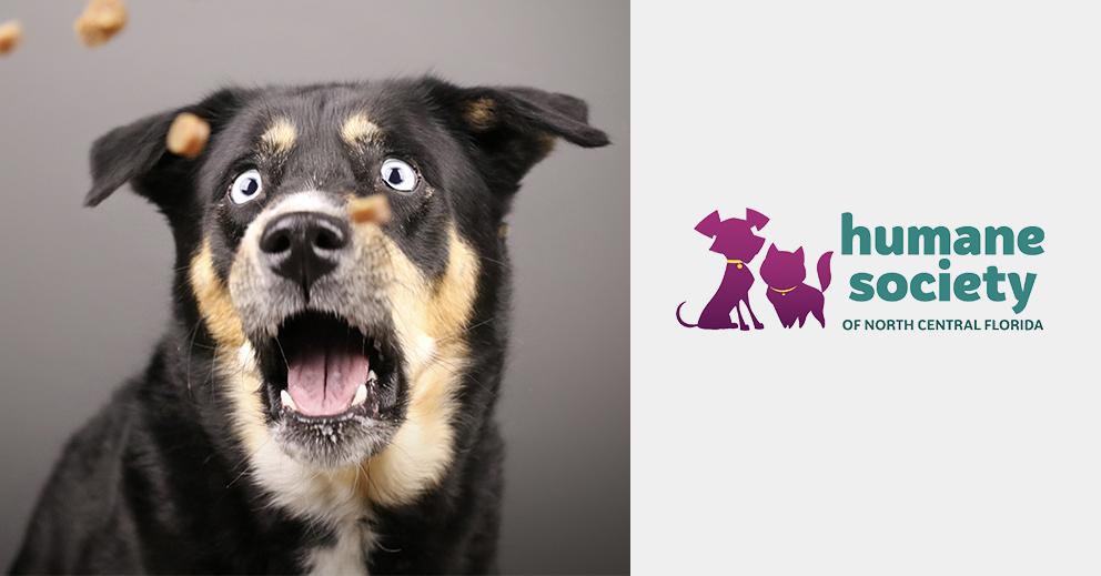 Pet Photo Shoot Fundraiser | Humane Society of North Central Florida