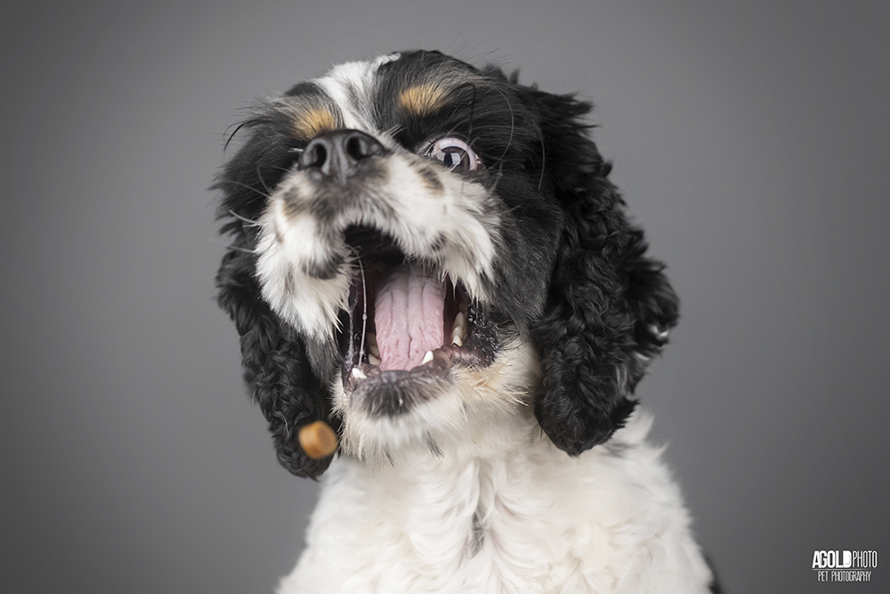11 Dogs Helps Raise Money for Charity by Having their Photos Taken