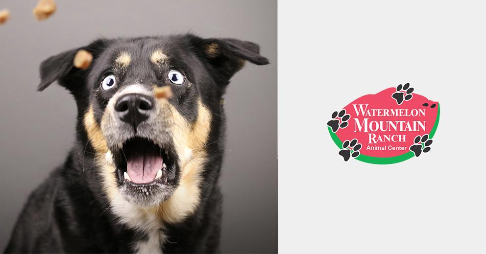 Pet Photo Shoot Fundraiser for Watermelon Mountain Ranch Animal Center