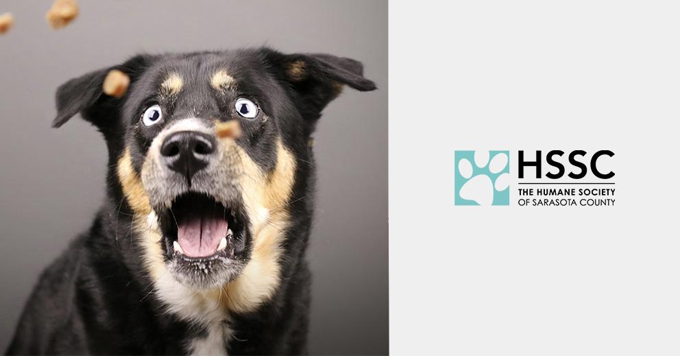 Pet Photo Shoot Fundraiser for Humane Society Sarasota County