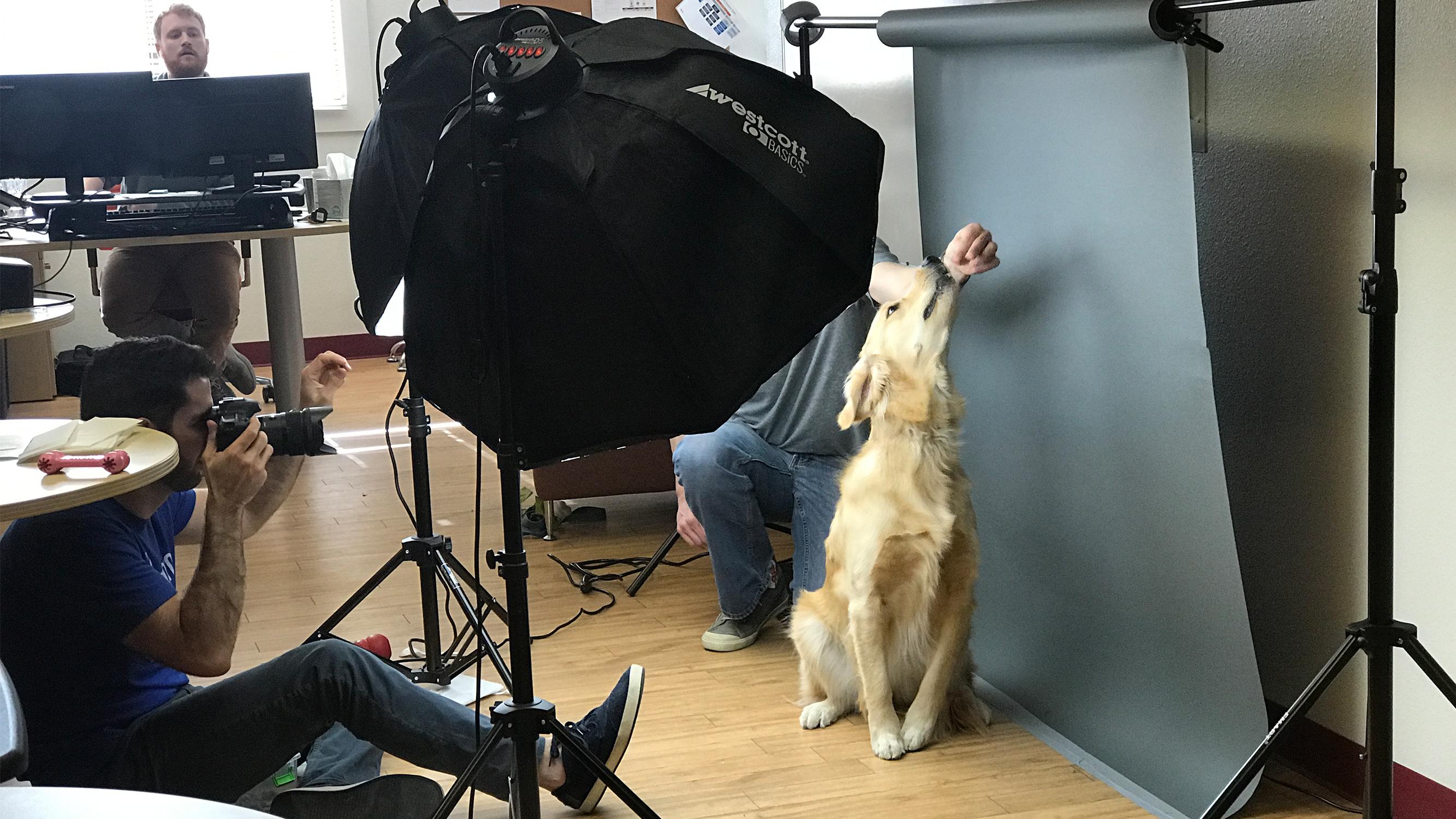 Office Pet Photo Shoot