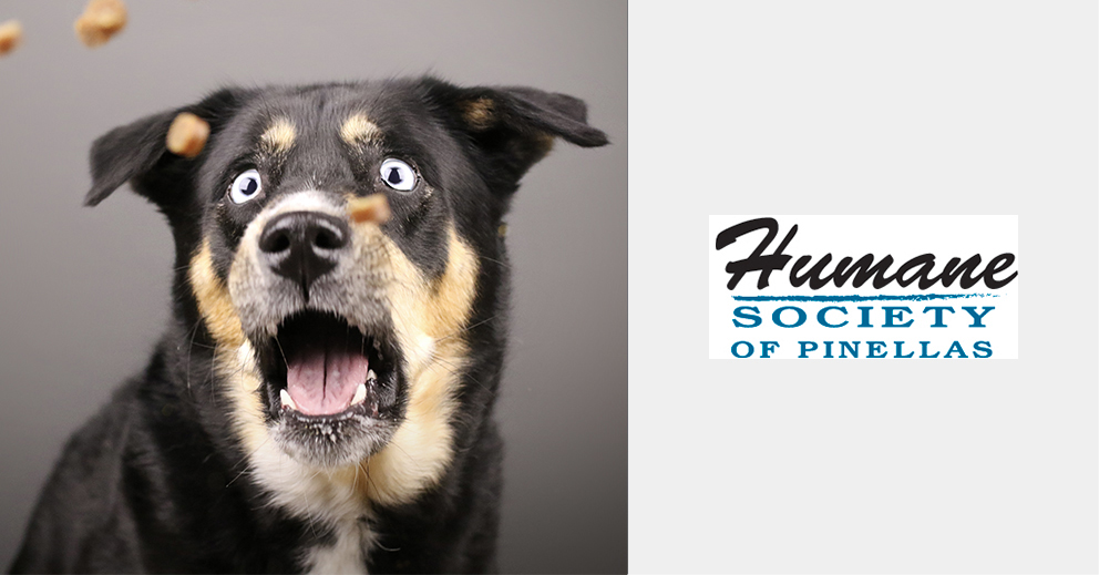 Pet Photo Shoot Fundraiser for Humane Society Pinellas