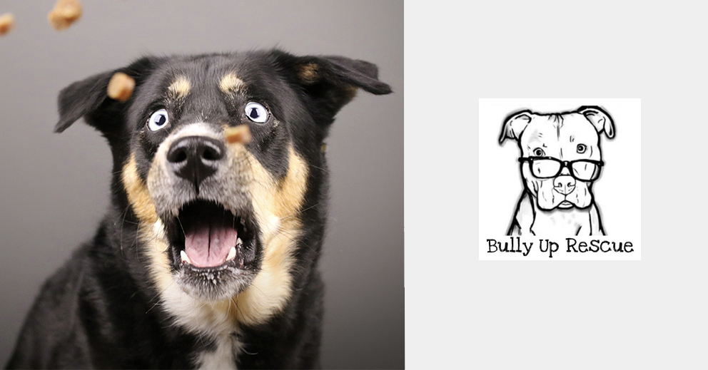Pet Photo Shoot Fundraiser for Bully Up Rescue (Orlando)