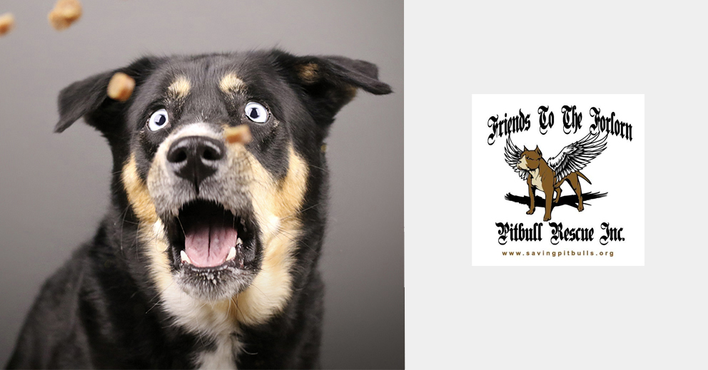 Pet Photo Shoot Fundraiser (Atlanta)