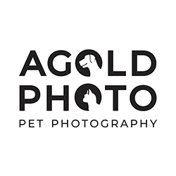 AGoldPhoto Pet Photography - Tampa Based Pet Photographer