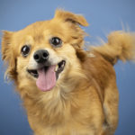 10 Adoptable Pups from Humane Society Tampa Bay