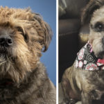 How a New Photo Lead Molly to Her Forever Home from Humane Society Tampa Bay