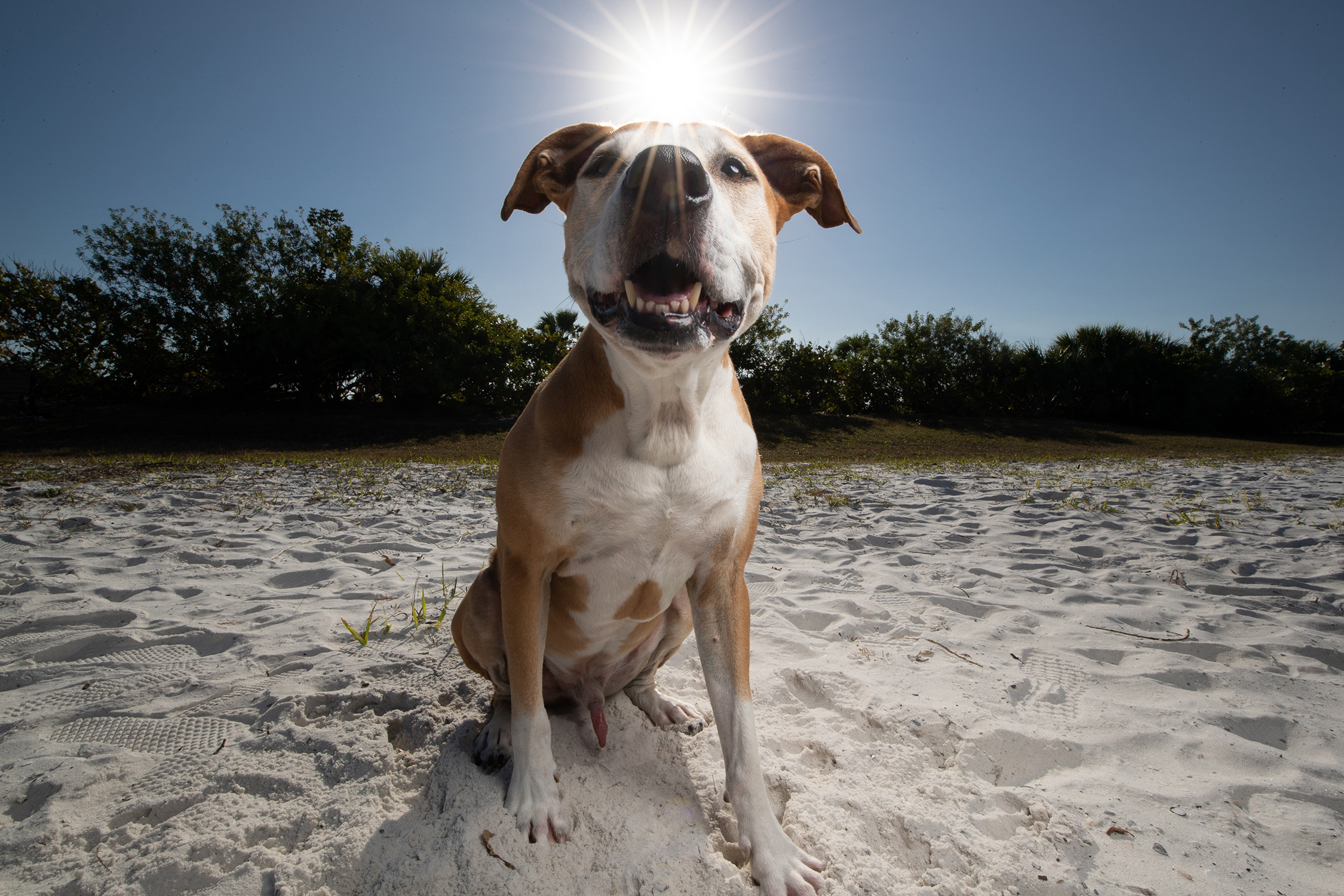 Summer Special: Tampa Wide Angle Pet Photo Shoots