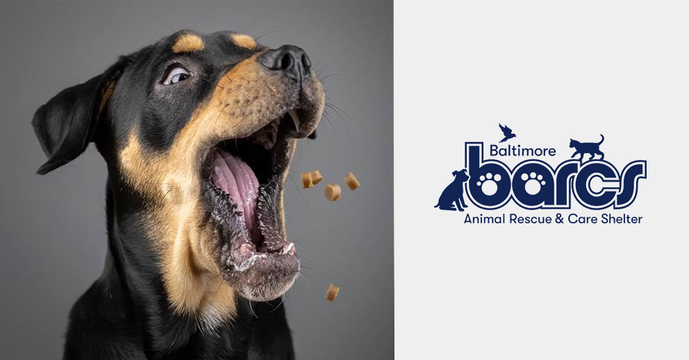 Pet Photo Shoot Fundraiser for BARCS (Baltimore)