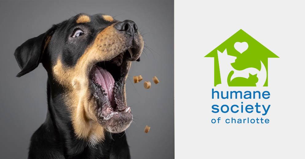 Pet Photo Shoot Fundraiser for Humane Society of Charlotte