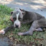 Dog Found Emaciated, with Mange, a Urinary Tract Infection and Fearful of Men Has Complete Turnaround