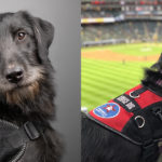 Denver Service Dog in Training Gets Treated to Professional Photo Shoot
