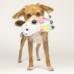 AGoldPhoto and the Good Stuffing Company Team Up for a Commercial Pet Photo Shoot